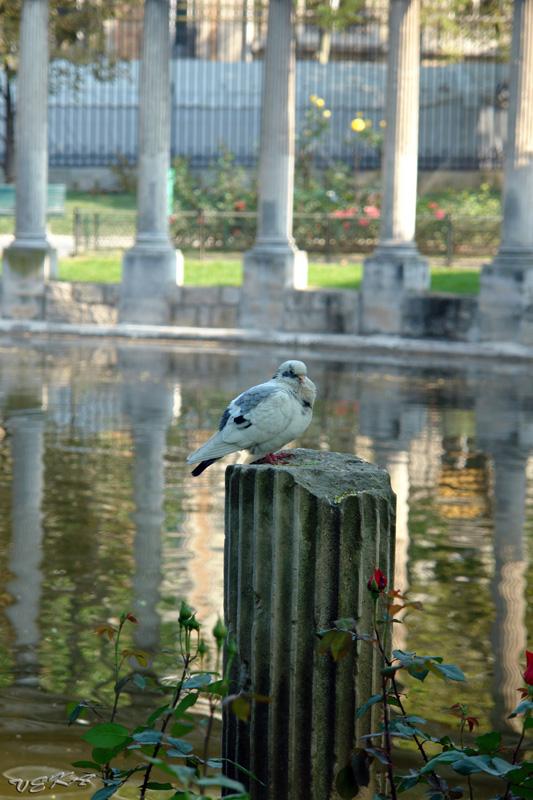 http://kvipic.narod.ru/Paris2007/ParisShow/SlideShow/images/011.jpg